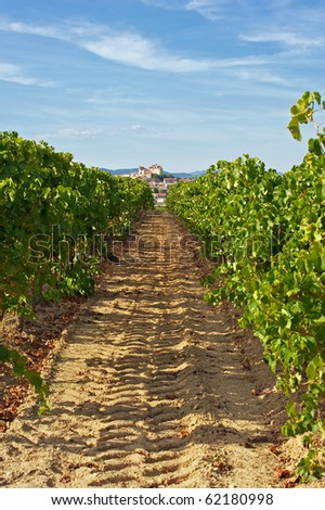 Vineyards and the Chateau of Puissalicon in the Herault Region of France