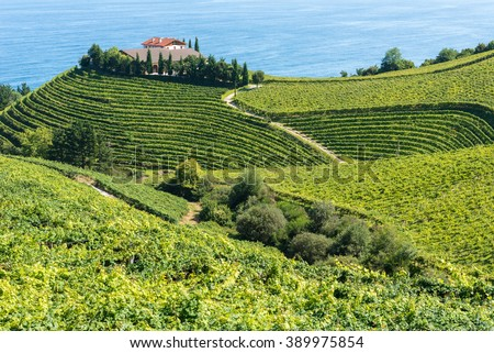 Vineyards and wine cellar with the Cantabrian sea in the background, Getaria (Spain)  #389975854