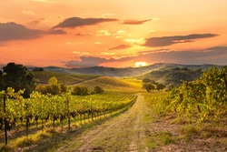 Vineyards and winery on sunset
