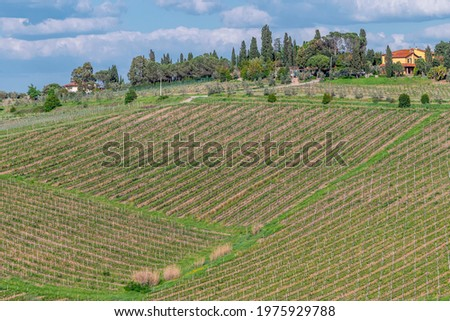 Vineyards as far as the eye can see for the production of Chianti wine in the province of Florence, Italy, in the area of Cerreto Guidi and Vinci Zdjęcia stock ©