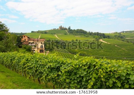 Vineyards at Barolo, in the Langhe wine district, Italy