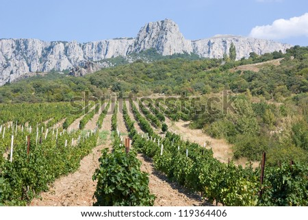 Vineyards at bottom of mountain