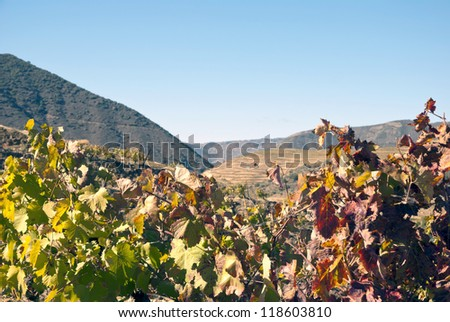Vineyards at Douro river valley in autumn, Uncesco world heritage, Portugal