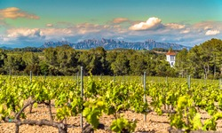 Vineyards at Penedes wine region with a beautiful cellar tower and the Montserrat Range in the distance / Catalonia, Spain.