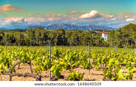 Vineyards at Penedes wine region with a beautiful cellar tower and the Montserrat Range in the distance / Catalonia, Spain. Foto stock ©