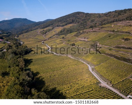 Vineyards in Alsace, France, crossed by an unpaved road #1501182668
