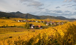 vineyards in alsace in france in autumn time