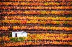 Vineyards in Douro river valley in Portugal. Portuguese wine region. Beautiful autumn landscape
