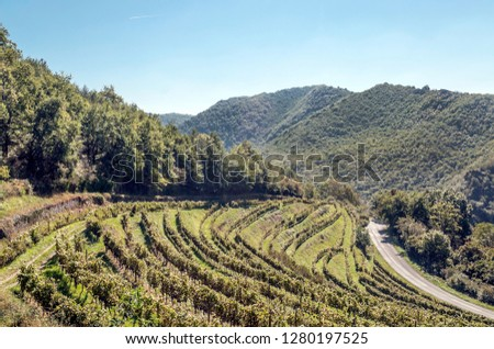 Vineyards in languedoc in france in sunny day