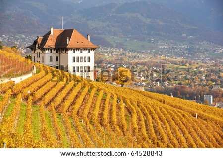 Vineyards in Lavaux region, Swittzerland