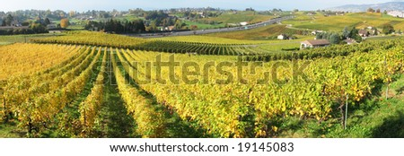 Vineyards in Montreux against Geneva lake, Switzerland