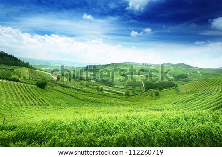 vineyards in Piedmont, Italy