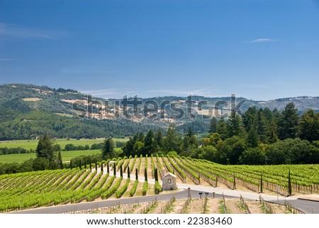 Vineyards in Sonoma, California. - stock photo