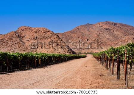 vineyards in the desert of the northern cape province of South Africa, irrigated from the Orange River