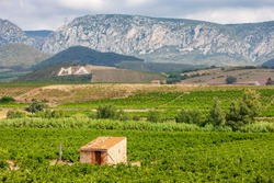 vineyards in the wine region Languedoc-Roussillon, Roussillon, France