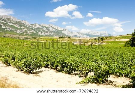 vineyards, La Rioja, Spain