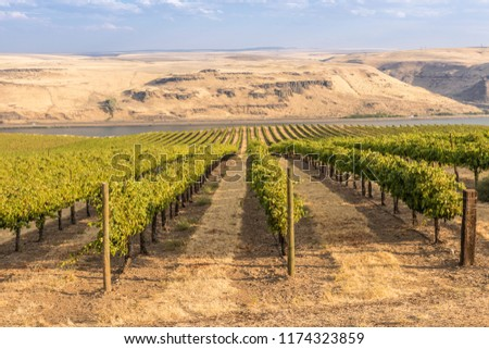 Vineyards landscape in the Columbia River Gorge Washington state. #1174323859