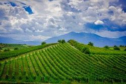 Vineyards mountains and sky view in Rahovec / Kosovo