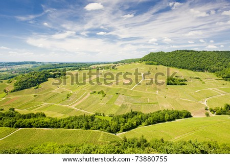 vineyards near Chateau Chalon, Department Jura, Franche-Comte, France