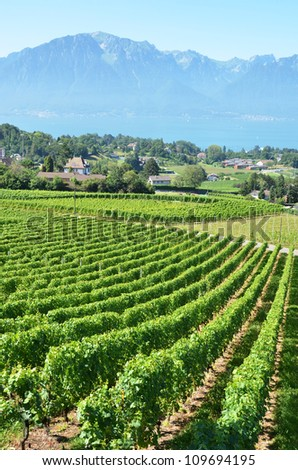 Vineyards near Montreux, Switzerland