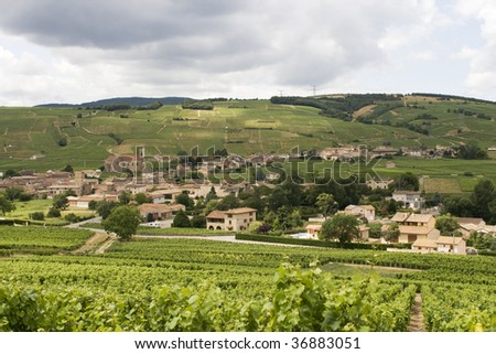 Vineyards near the French village of Auxerres in Burgundy - stock photo