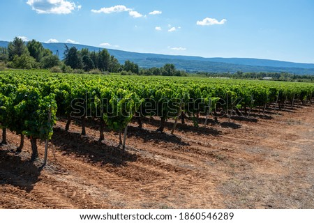 Vineyards of AOC Luberon mountains near Apt with old grapes trunks growing on red clay soil, Vaucluse, Provence, France. Red or rose wine grape ready to harvest. Stockfoto ©