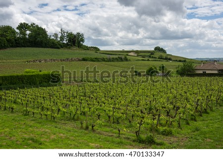 Vineyards of Saint-Emilion, one of the main red wine production areas of Bordeaux region, France #470133347