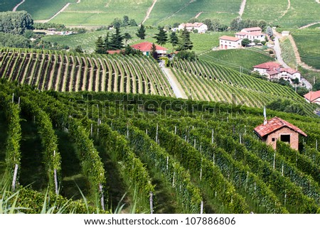 Vineyards on the hills in Piedmont province in Italy
