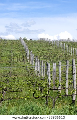 Vineyards on the mountain ,are a lot of work - stock photo