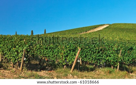 Vineyards  over hill at Chianti, Italy.