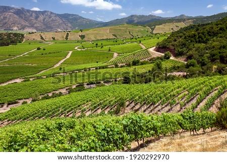 Vineyards producing Chilean wine near Santa Cruz in the Colchagua Valley in central Chile, South America. Сток-фото ©