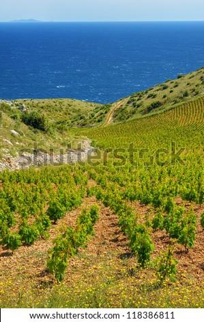 Vineyards, southern coast of Hvar island, west of Sveta Nedjelja, Croatia - stock photo