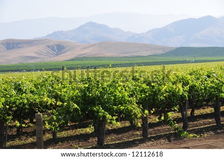 Vineyards stretch to the foothills of the Sierra Nevada Range, California