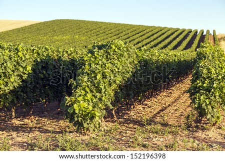 vineyards with denomination of origin Rioja, Spain. Cherished its famous wines