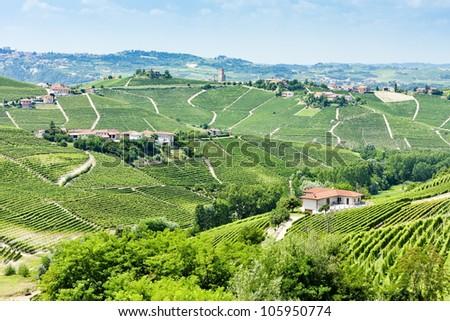 vineyars near Barbaresco, Piedmont, Italy