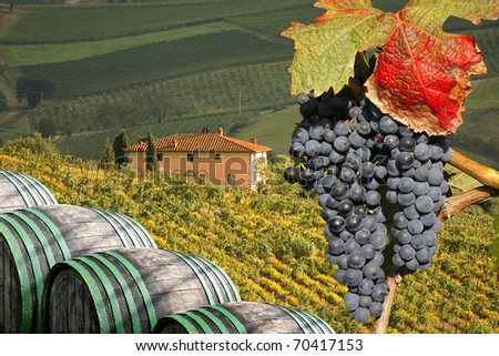 stock photo : Vineyeard in Chianti, Toscany, Italy, famous landscape