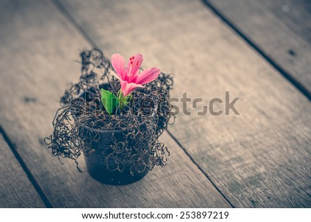 vintage abstract dried plant and new Generating of pink hibiscus. wood background