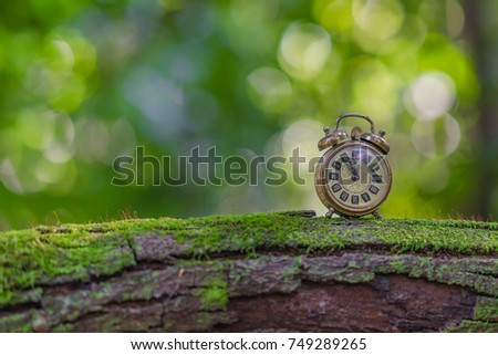 Vintage alarm clock in the woods, concept, make time for nature.