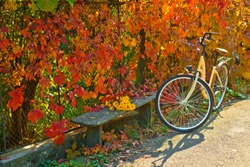 Vintage atmospheric autumnal photo of bicycle at the wall of beautiful burgundy colorful autumn leafs. Yellow flowers at the wooden park bench. Fall warm weather. Hipster style concept