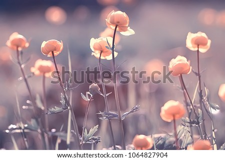 Photo of  vintage background little flowers, nature beautiful, toning design spring nature, sun plants