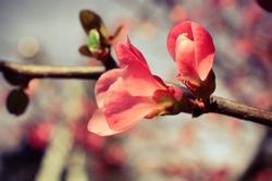 Vintage background of spring blossom of flowers