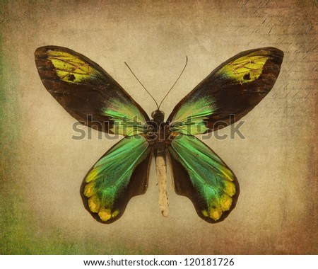 Vintage background with green butterfly - stock photo