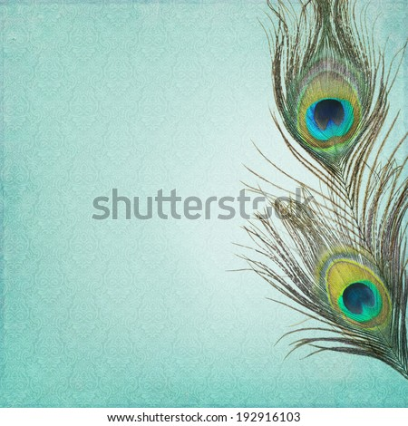 Vintage background with peacock feathers