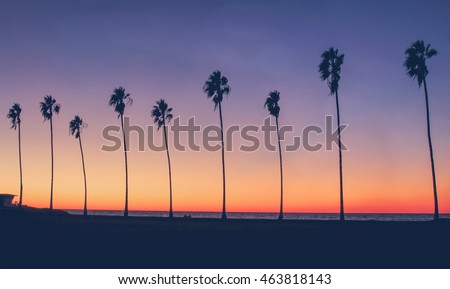 Vintage Beach Photo - Row of palm trees silhouettes during a colorful sunset at the beach in California