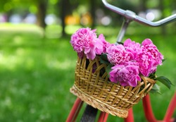 Vintage bicycle with basket with peony flowers in the spring park