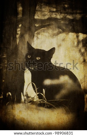 vintage black scary cat textured background