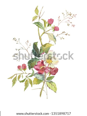 Vintage botanical illustration of the raspberry twig with berries and flowers. Hand-drawn watercolor bouquet of wildflowers. Berries, flowers and herbs set. Isolated image on a white background