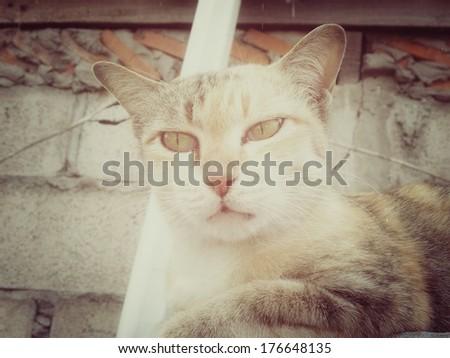 Vintage cat looking.