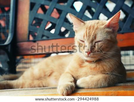 Vintage cat portrait focus at eye.