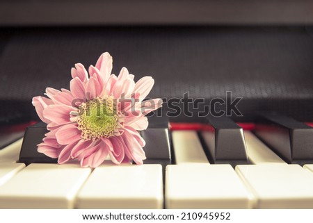 Vintage chrysanthemum on piano keyboard, abstract for background.